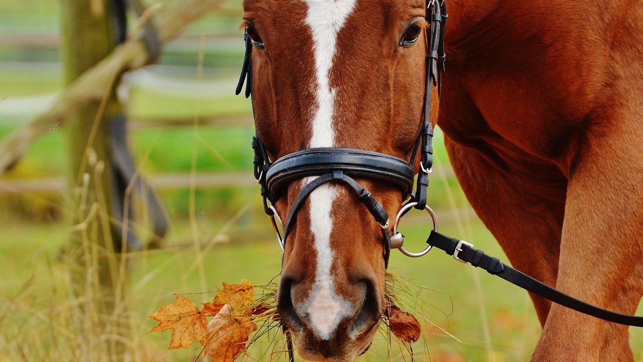 Politie vangt paard bij Eindhovenseweg