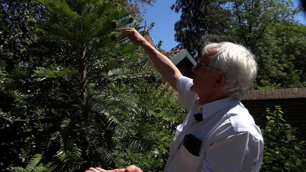 Een boom die niet bestond voor botanische tuin Jochumhof