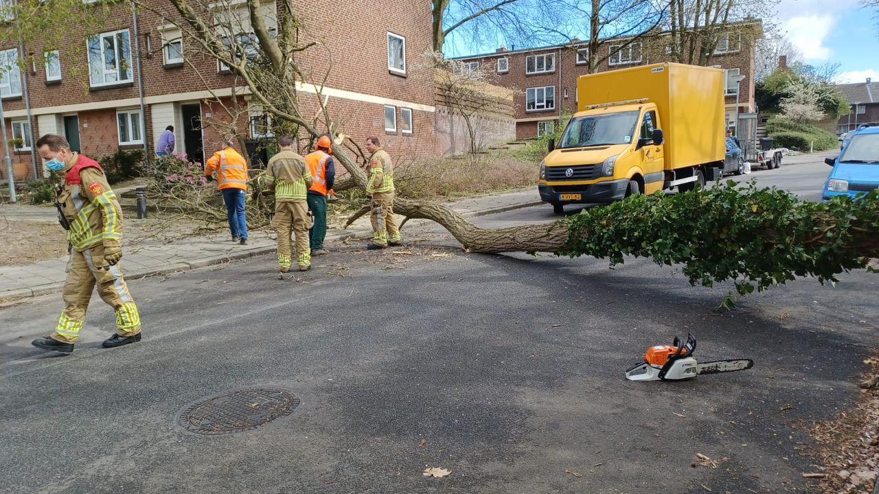 Omgewaaide boom verspert straat Venlo-Oost